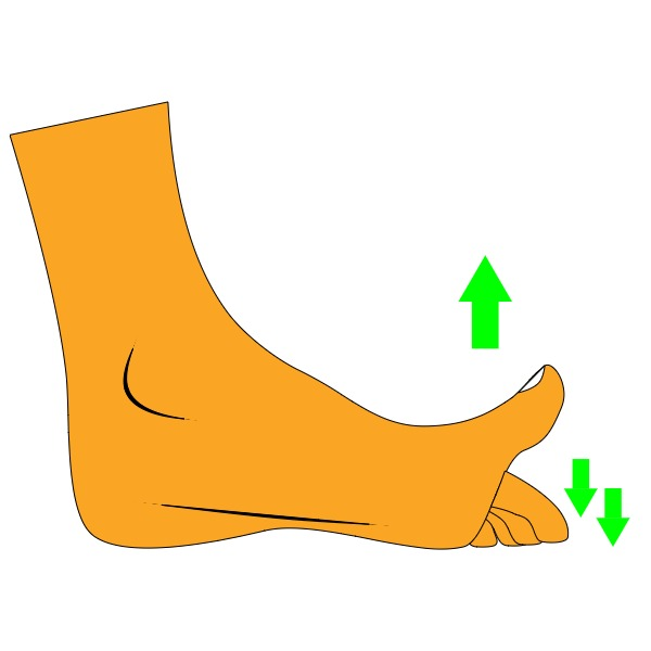 Wondering how to fix flat feet? Try the toe press exercise